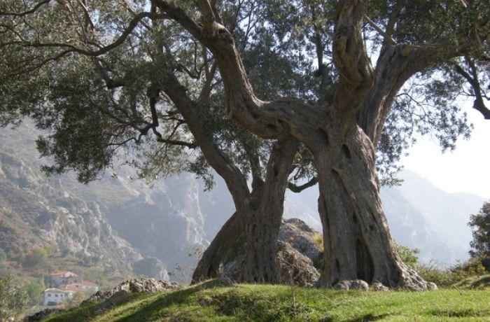 Албания высадит 20,2 млн. деревьев до 2020 года