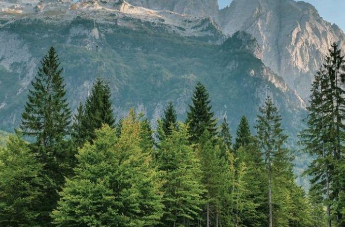 Албания вводит уголовную ответственность за незаконную вырубку лесов