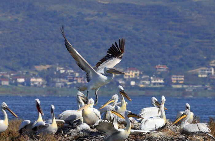 Экологи выступают против строительства курорта за $ 1,7 млрд в Албании