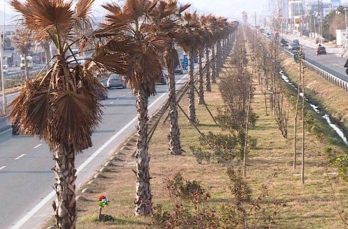 Шоссе между Тираной и Дурресом станет красивее благодаря озеленительным работам