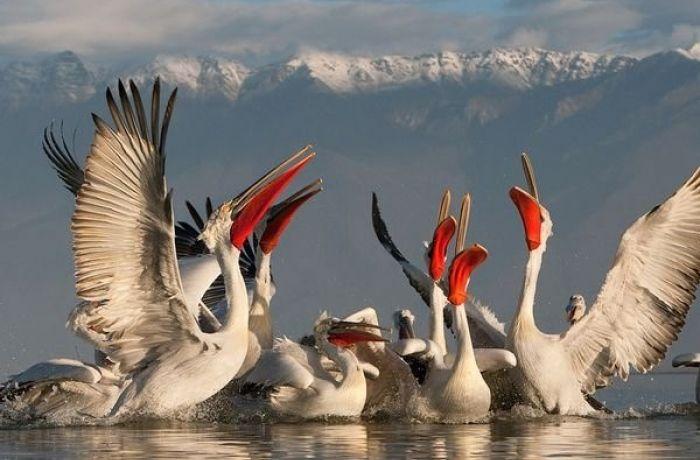 Запрет на охоту привел к росту количества перелетных птиц в Албании