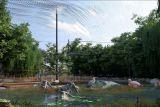 В албанской столице будет реконструирован зоопарк
